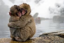 Nagano's Snow Monkeys
