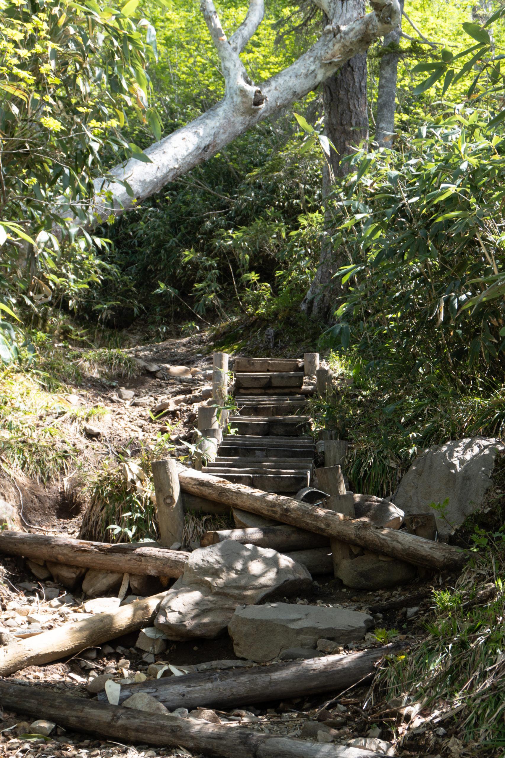 Tengu no Hara Hike - Tsugaike Hiking June 17th (22 of 40)